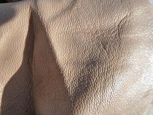 Boxspringbett Leder kühlend Ziegenleder Oberfläche